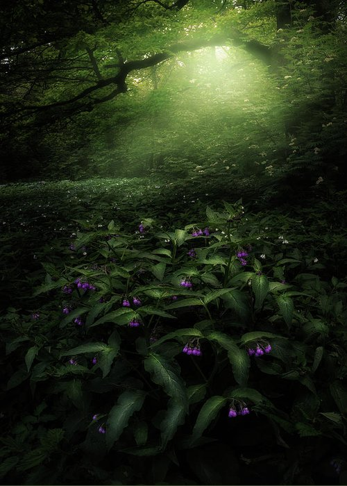 Mist Greeting Card featuring the photograph Elves Woods by Kirill Volkov