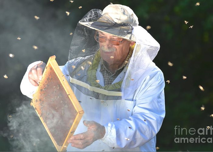Bee Greeting Card featuring the photograph Experienced Senior Beekeeper Making by Darios