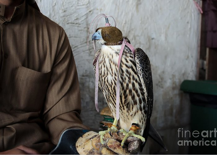 Hunt Greeting Card featuring the photograph Falconer With His Falcon, Used For by Ipics