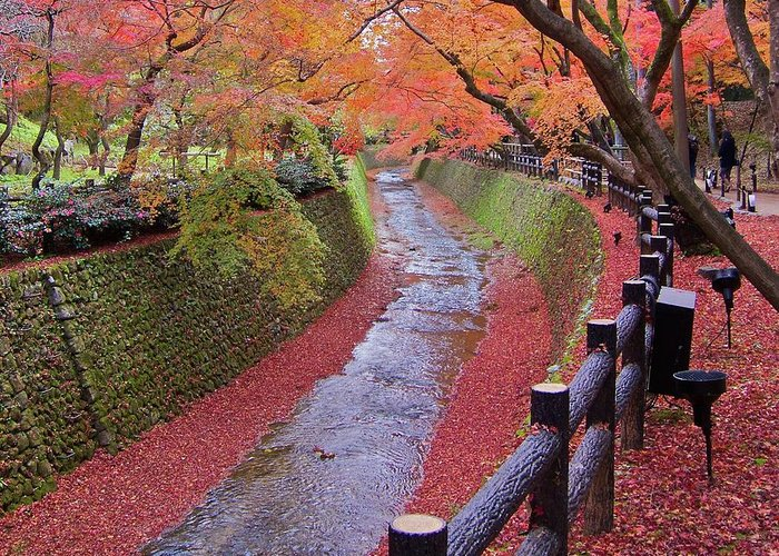 Outdoors Greeting Card featuring the photograph Fall Colors Along Bending River In Kyoto by Jake Jung