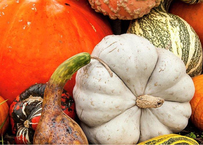 Season Greeting Card featuring the photograph Fall Season Squash And Pumpkins by M Timothy O'keefe