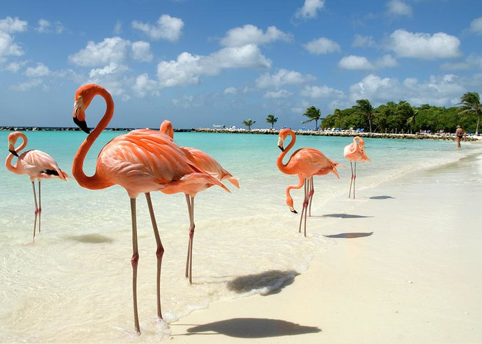 Shadow Greeting Card featuring the photograph Flamingos On The Beach by Vanwyckexpress