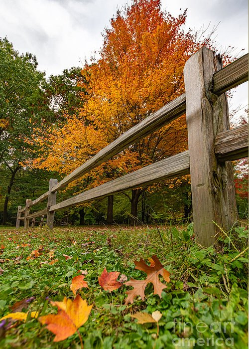 Fall Greeting Card featuring the photograph Fleeting Fall Foliage by Amfmgirl Photography