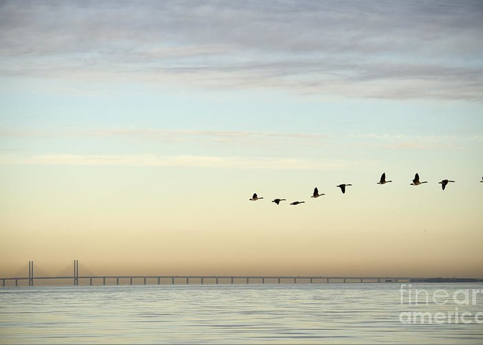 Sky Greeting Card featuring the photograph Flock Of Birds Flying Near Bridge by Bmj