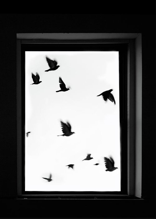 Spooky Greeting Card featuring the photograph Flock Of Crows Seen Through A Window by Grant Faint