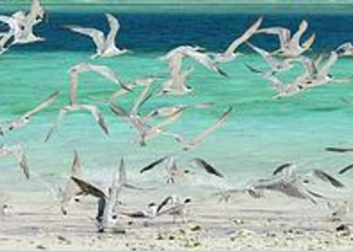 Scenics Greeting Card featuring the photograph Flock Of Seagulls By Azure Beach by Christopher Leggett