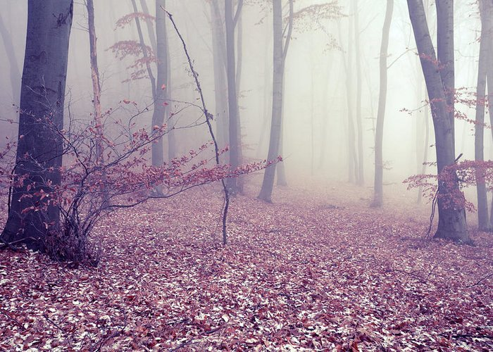 Spooky Greeting Card featuring the photograph Fog by Floriana