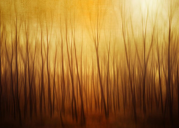 Dawn Greeting Card featuring the photograph Forest by Philippe Sainte-laudy Photography