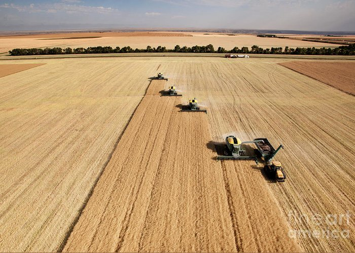 Big Greeting Card featuring the photograph Four Harvesters Combing On A Prairie by Tyler Olson