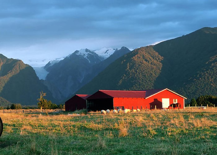 Horse Greeting Card featuring the photograph Fox Glacier Looms Over Plain by Dmathies