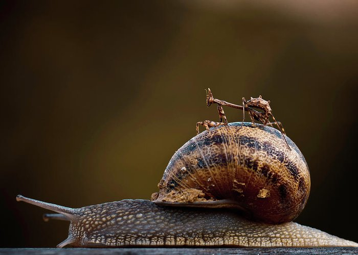 Humour Greeting Card featuring the photograph Free Ride by Fabien Bravin