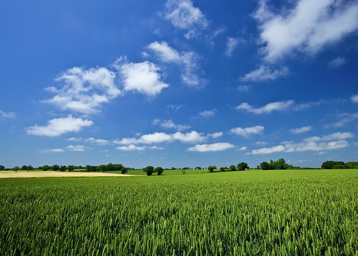 Environmental Conservation Greeting Card featuring the photograph Fresh Air. Blue Skies Over Green Wheat by Alvinburrows