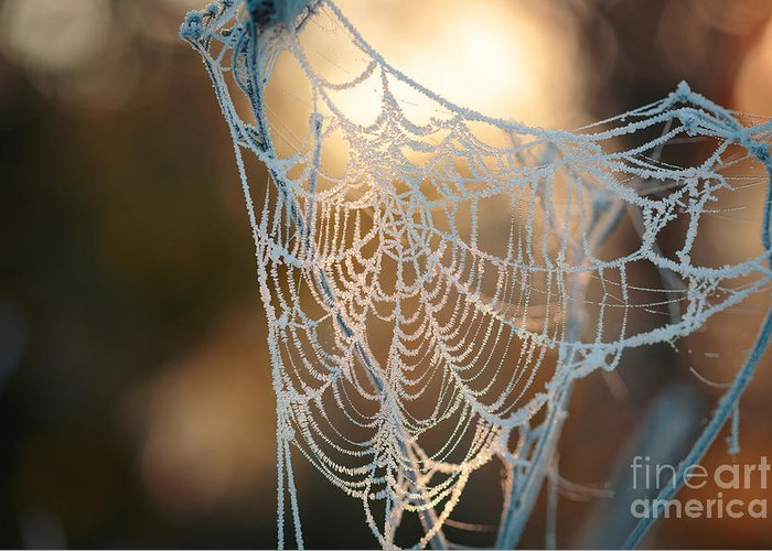 Through Greeting Card featuring the photograph Frozen October Morning Cobwebs by Stone36