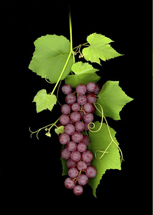 Greeting Card featuring the photograph Fruit Of The Vine by Sandi F Hutchins