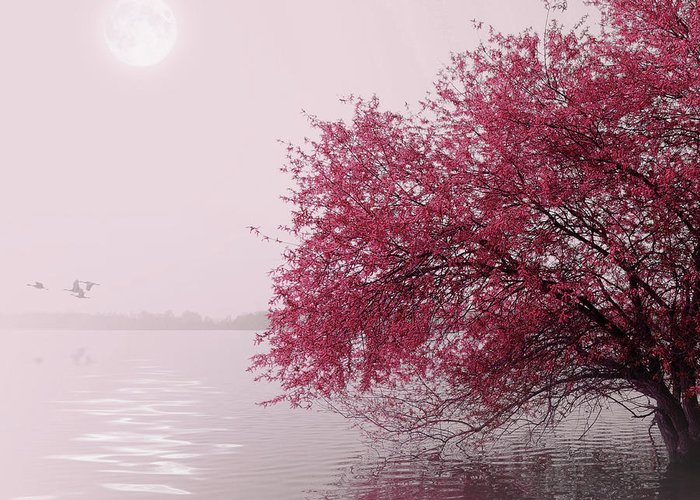Outdoors Greeting Card featuring the photograph Full Moon On The Lake by Philippe Sainte-laudy Photography