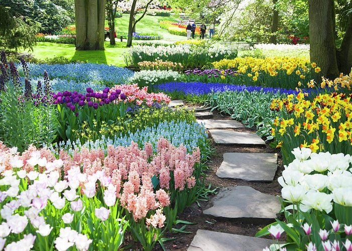 Flowerbed Greeting Card featuring the photograph Garden Flowers 53 Xxxl by Lya cattel
