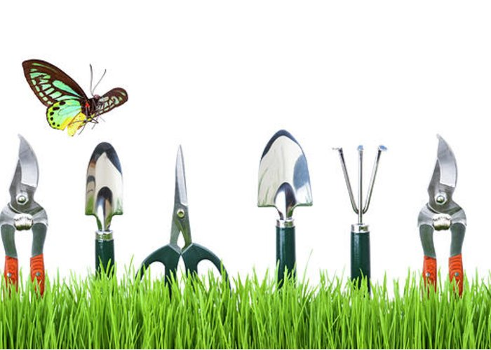 Grass Greeting Card featuring the photograph Garden Tools by Liliboas