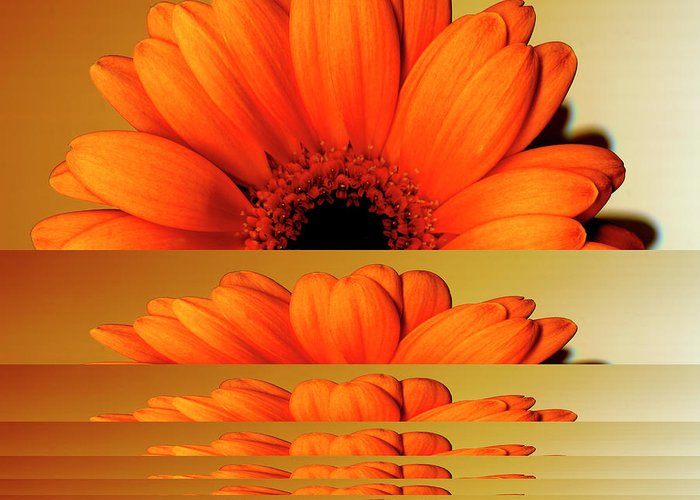 Orange Color Greeting Card featuring the digital art Gerbera Flower As Rising Sun by Eversofine