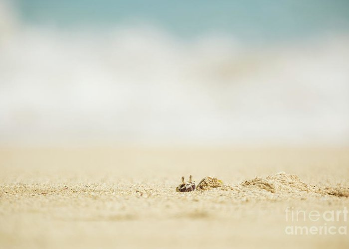 Hawaii Greeting Card featuring the photograph Ghost Crab Emerging From Hole In Sand by Charmian Vistaunet