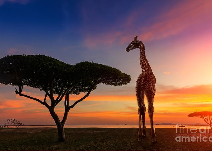 Game Greeting Card featuring the photograph Giraffes In The Savannah At Sunset by Weerasak Saeku