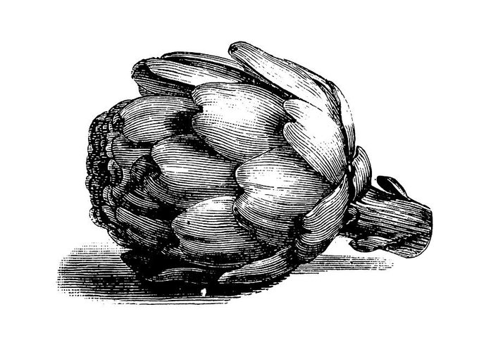 Italian Food Greeting Card featuring the digital art Globe Artichoke   Antique Culinary by Nicoolay