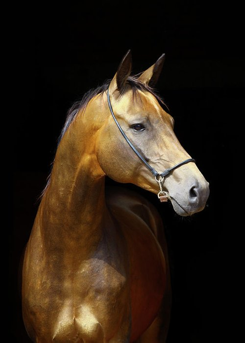 Horse Greeting Card featuring the photograph Golden Horse by Photographs By Maria Itina