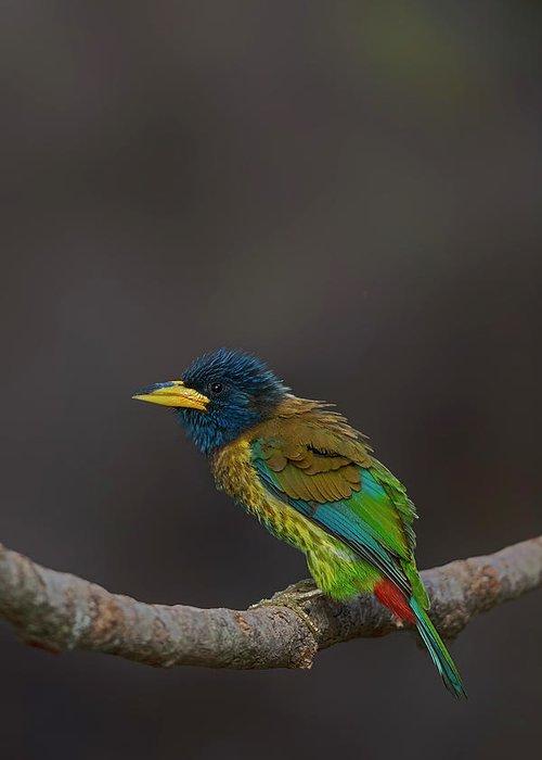 Beautiful Birds Greeting Cards