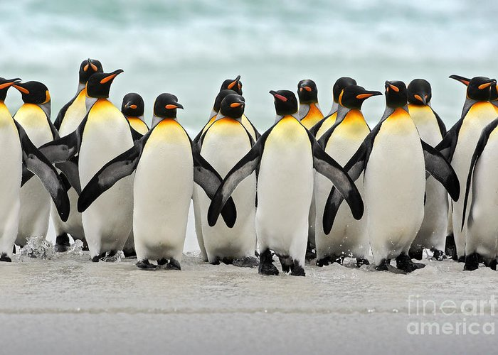 Antarctic Greeting Cards