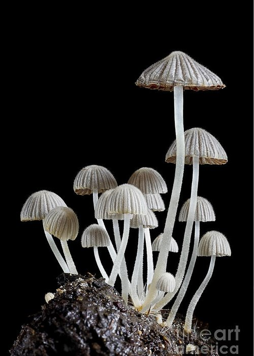 Small Greeting Card featuring the photograph Group Of Mushrooms by Igor Kovalenko