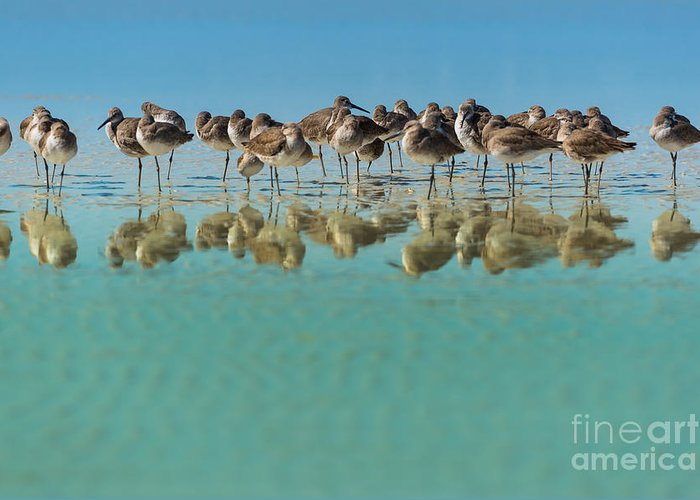 Usa Greeting Card featuring the photograph Group Of Willets Reflection On The by Kris Wiktor