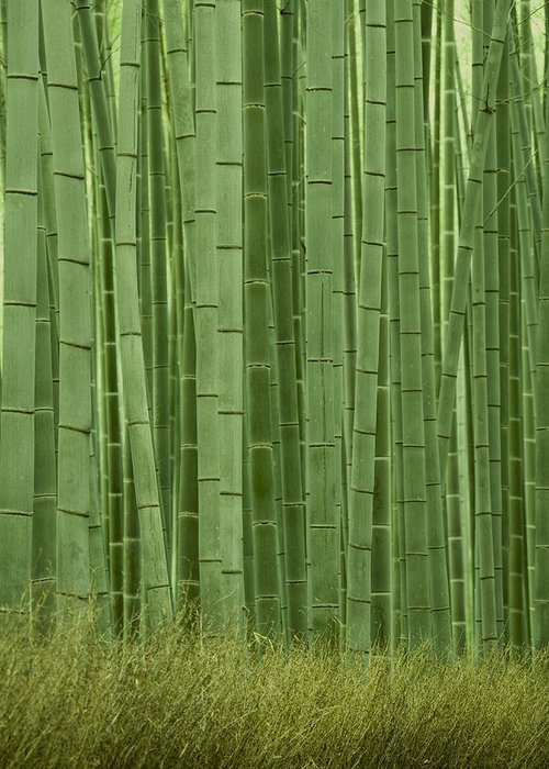 Bamboo Greeting Card featuring the photograph Grove Of Bamboo Trees Phyllostachys by Akira Kaede