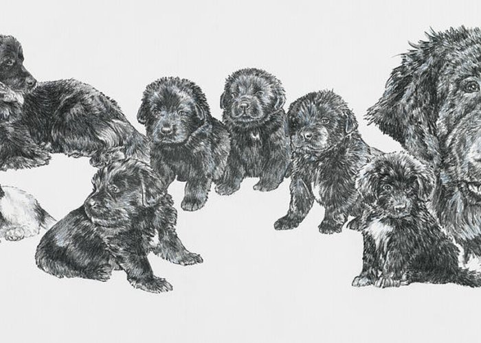 Puppies To Full Grown Newfoundland Greeting Card featuring the painting Growing Up Newfoundland by Barbara Keith