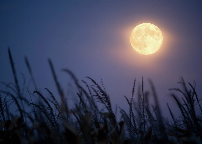 Sky Greeting Card featuring the photograph Harvest Moon by Jimkruger