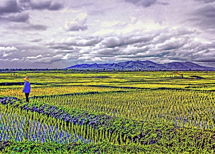 Rice Greeting Card featuring the photograph Heartland by Steve Harrington
