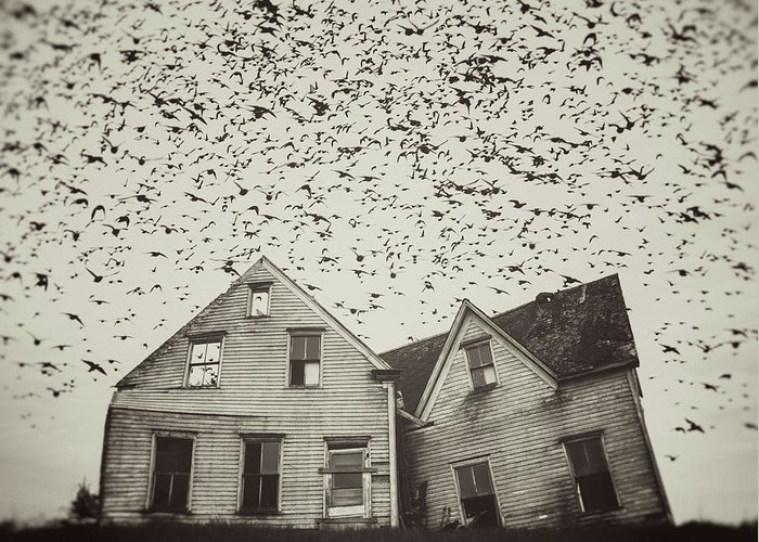 Spooky Greeting Card featuring the photograph Home Of Murmuration by Shaunl