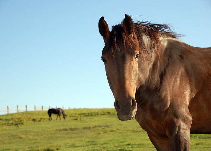 Horse Greeting Card featuring the photograph Horse by Esemelwe