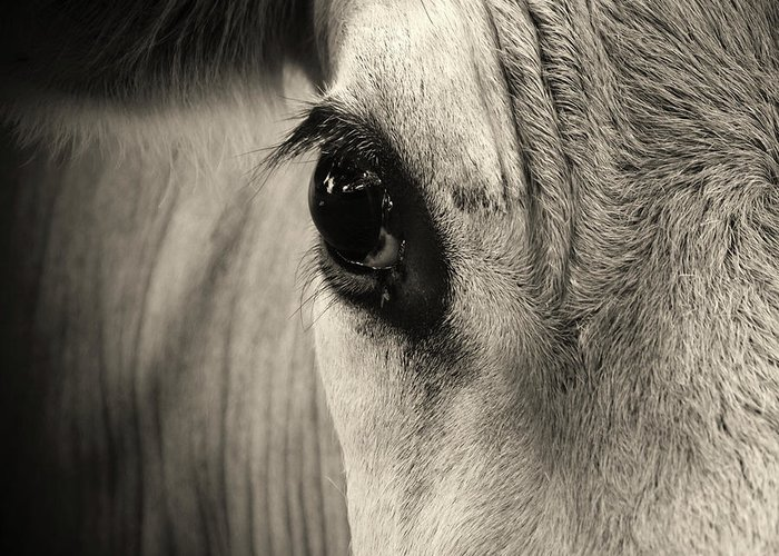 Horse Greeting Card featuring the photograph Horse Eye by Karena Goldfinch