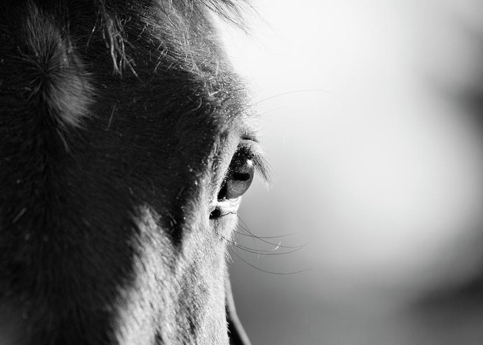 Horse Greeting Card featuring the photograph Horse In Black And White by Malcolm Macgregor