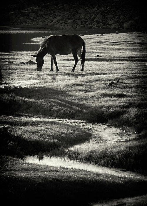 Horse Greeting Card featuring the photograph Horse by Muratseyit