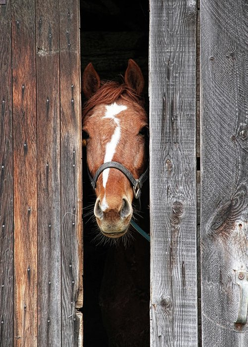 Horse Greeting Card featuring the photograph Horse Peeking Out Of The Barn Door by 2ndlookgraphics