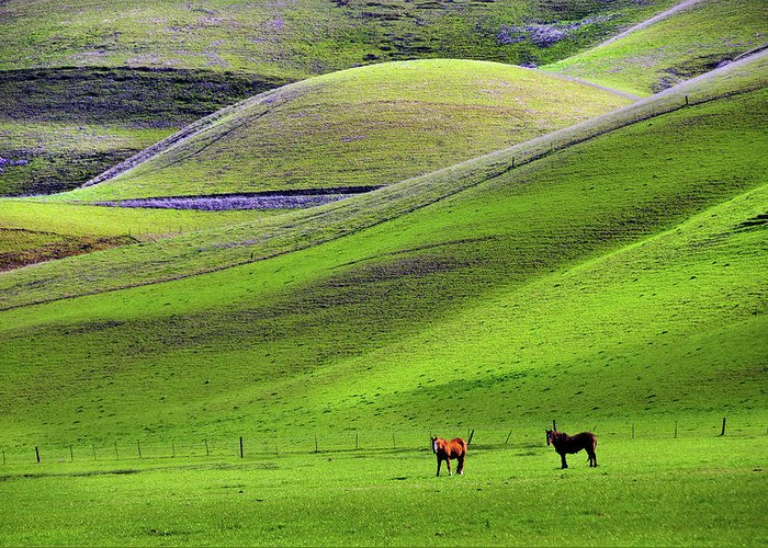 Horse Greeting Card featuring the photograph Horses In Hill Country by Mitch Diamond