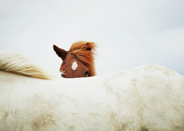 Animal Themes Greeting Card featuring the photograph Horses by Markus Renner