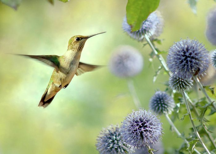 Animal Themes Greeting Card featuring the photograph Hovering Hummingbird by Nancy Rose