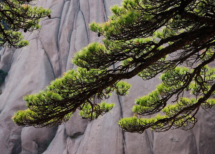 Chinese Culture Greeting Card featuring the photograph Huang Shan Landscape, China by Mint Images/ Art Wolfe