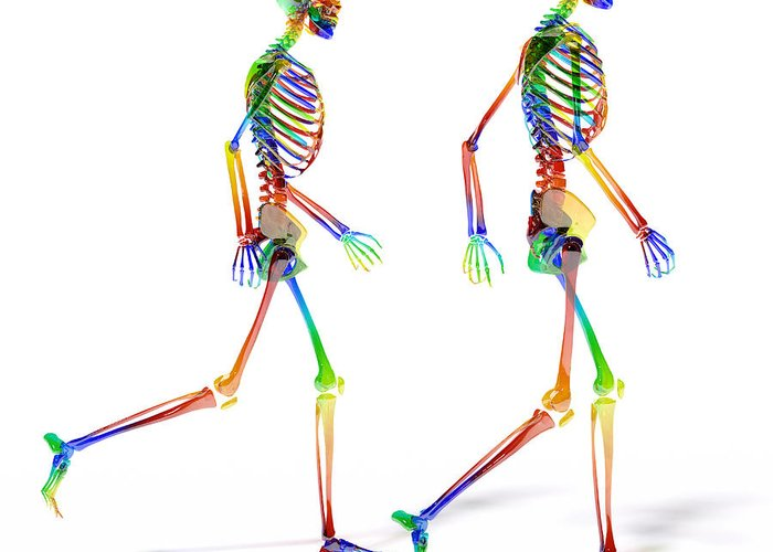 Human Greeting Card featuring the digital art Human Skeleton Pair by Betsy Knapp