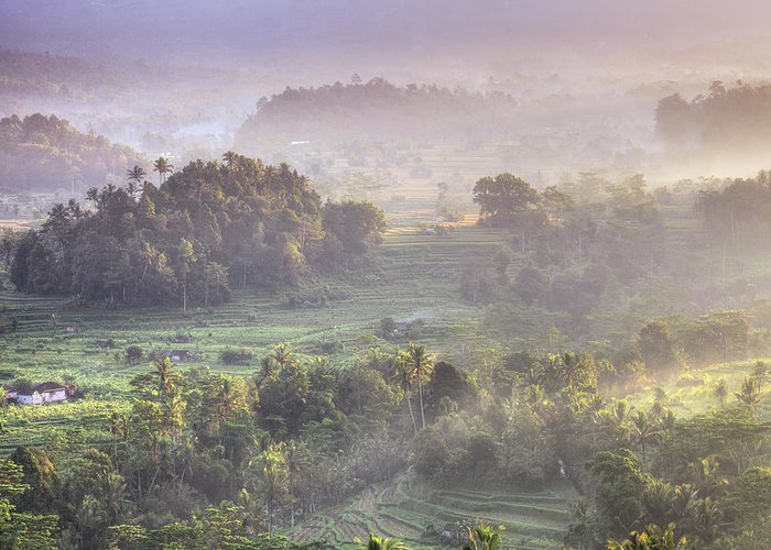 Tranquility Greeting Card featuring the photograph Indonesia, Bali, Forest Landscape by Michele Falzone