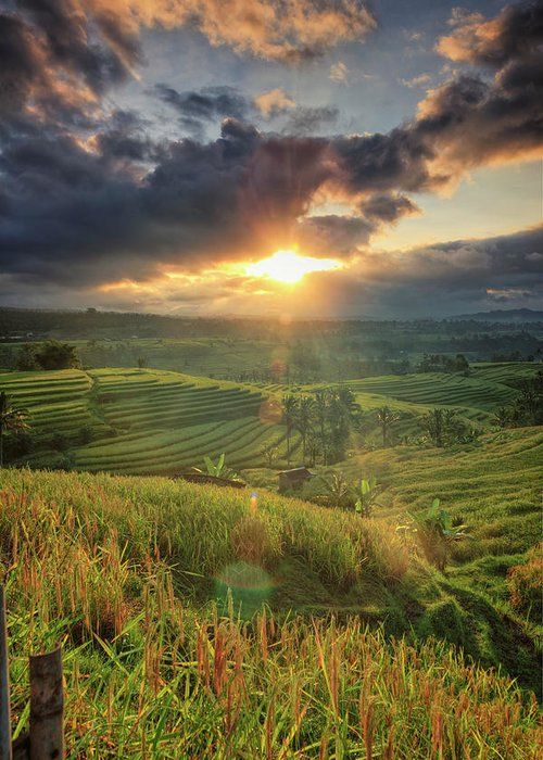 Tranquility Greeting Card featuring the photograph Indonesia, Bali, Jatiluwih Rice Terraces by Michele Falzone