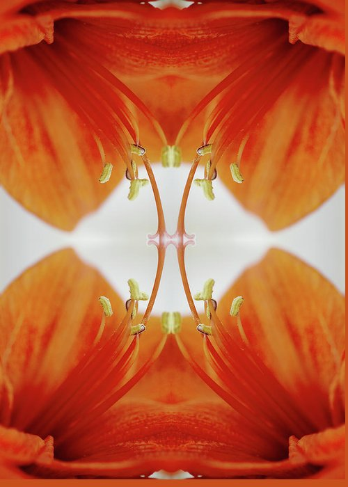 Tranquility Greeting Card featuring the photograph Inside An Amaryllis Flower by Silvia Otte