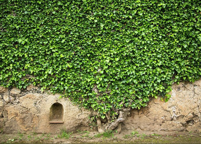 Arch Greeting Card featuring the photograph Ivy On A Wall Of Villa Cimbrone, Ravello by Buena Vista Images