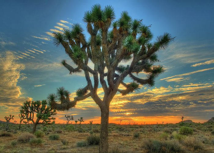 Scenics Greeting Card featuring the photograph Joshua Tree At Sunrise by Photograph By Kyle Hammons